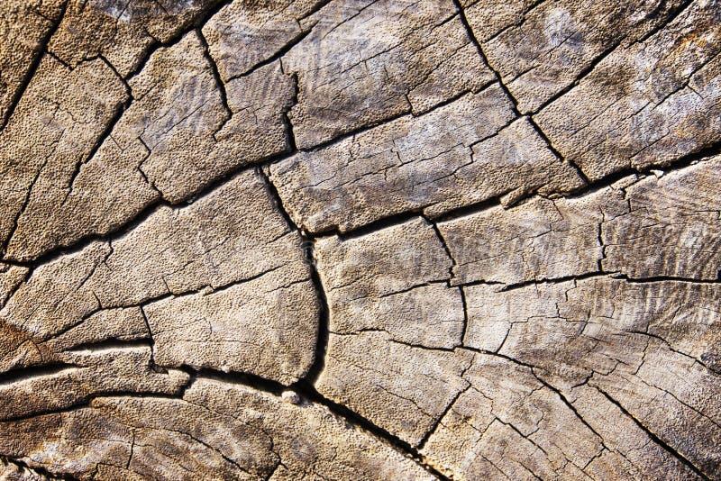 Le vieux bois donne au fond une consistance rugueuse photos stock