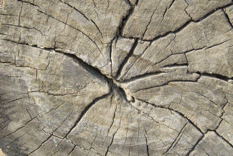 Le vieux bois donne au fond une consistance rugueuse photographie stock