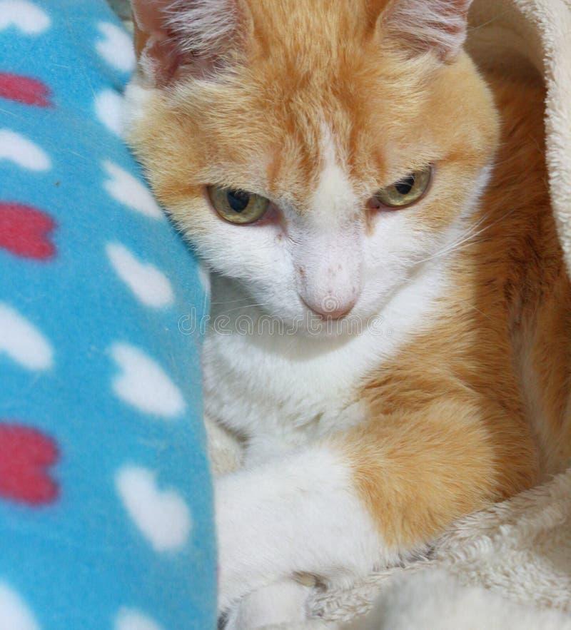 Le vieux chat de gingembre s'est étendu sur son lit se maintenant chaud photo stock