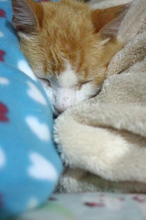Le vieux chat de gingembre s'est étendu sur son lit se maintenant chaud images stock