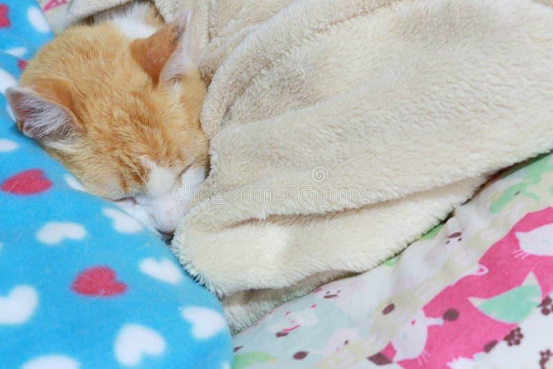 Le vieux chat de gingembre s'est étendu sur son lit se maintenant chaud photographie stock libre de droits