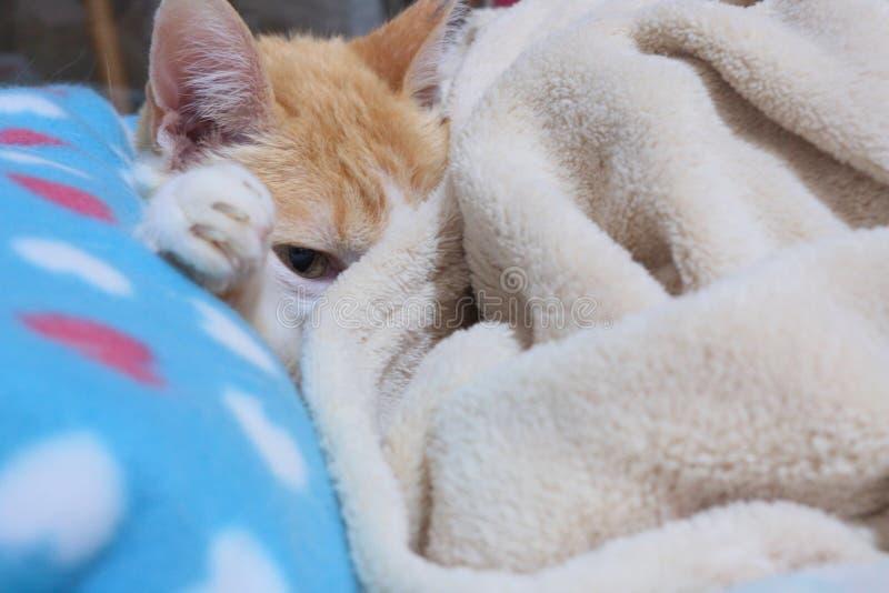 Le vieux chat de gingembre s'est étendu sur son lit se maintenant chaud photos stock
