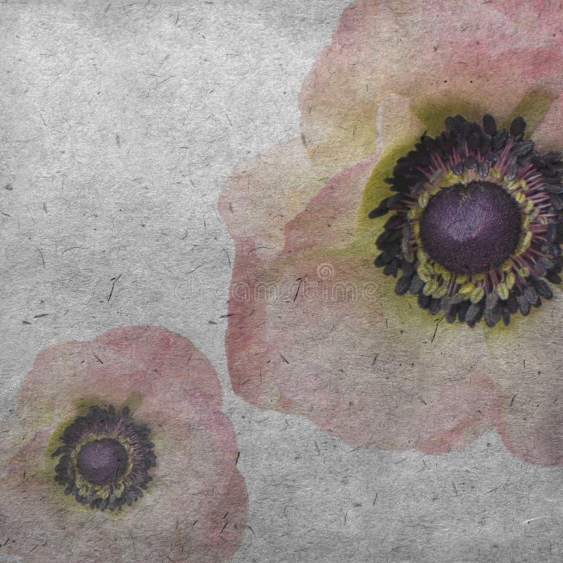 Le vieux fond de papier texturisé avec pâle - anémone rose image libre de droits