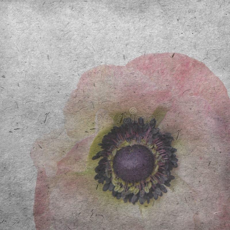 Le vieux fond de papier texturisé avec pâle - anémone rose image stock