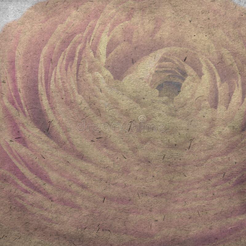 Le vieux fond de papier texturisé avec le ranunculus orange pâle, renoncule persane photo libre de droits