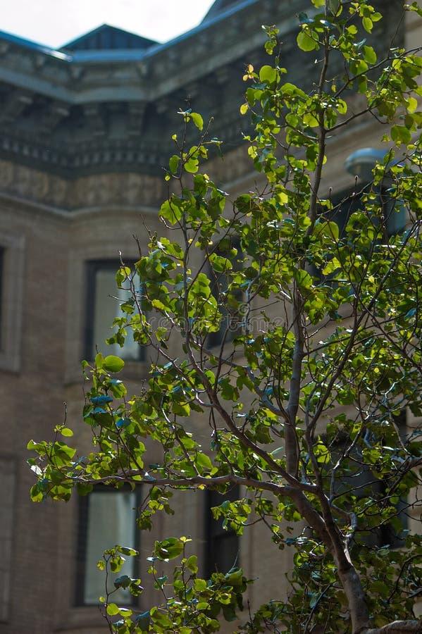 Le vieux manoir à Boston le Massachusetts, vue par l'arbre part photographie stock