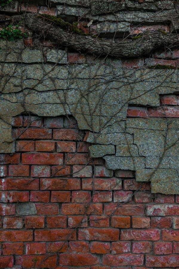 Le vieux tronc de mur de briques et d'arbre photos libres de droits