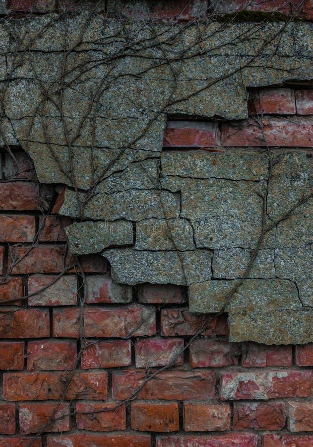 Le vieux tronc de mur de briques et d'arbre photographie stock libre de droits