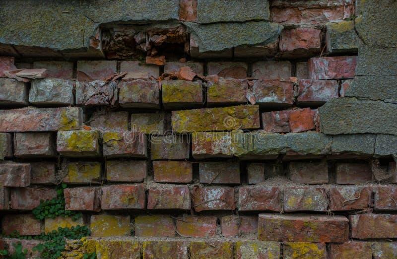 Le vieux tronc de mur de briques et d'arbre image stock