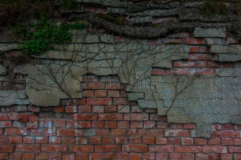 Le vieux tronc de mur de briques et d'arbre photographie stock