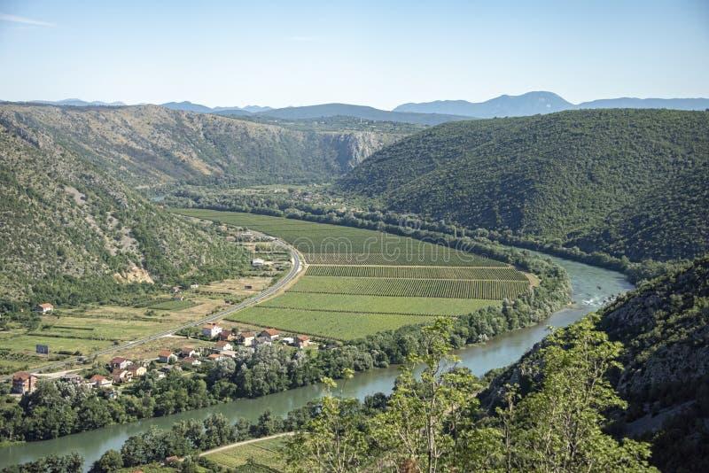 Le vigne allungano per quanto l'occhio può vedere nella zona centrale carsica dell'Erzegovina in Bosnia-Erzegovina immagini stock libere da diritti