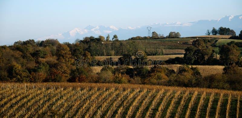 Le vigne si avvicinano ai Pyrenees. immagine stock libera da diritti
