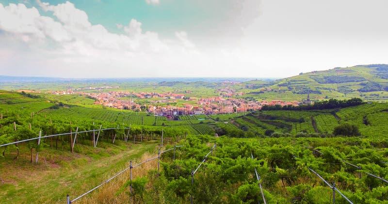 Le vigne sulle colline italiane immagini stock libere da diritti
