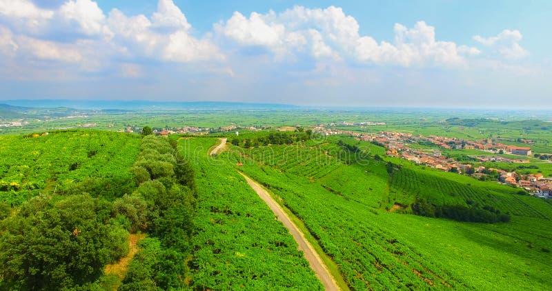Le vigne sulle colline italiane fotografia stock libera da diritti