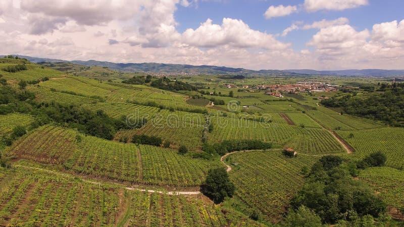 Le vigne sulle colline italiane immagine stock libera da diritti