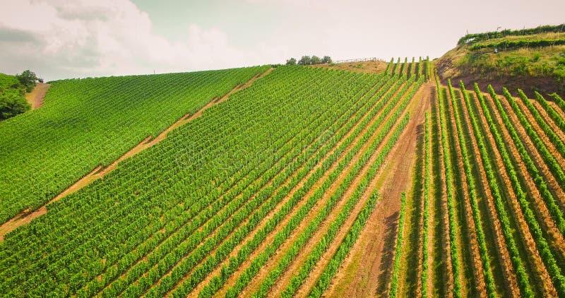 Le vigne sulle colline italiane immagine stock