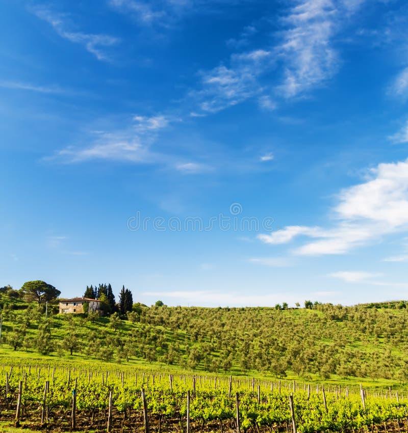 Le vignoble toscan et les oliviers photo stock