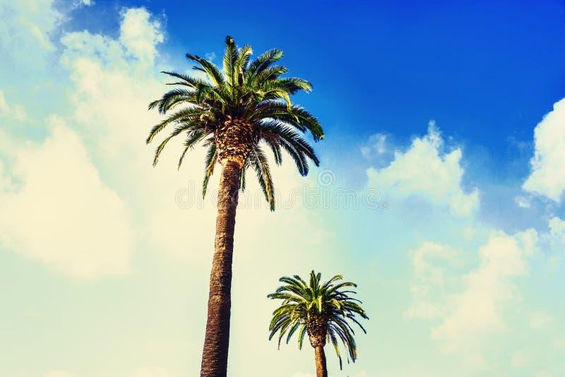 Le vintage a filtré la photo avec des palmiers à la côte tropicale dans vieux photo libre de droits