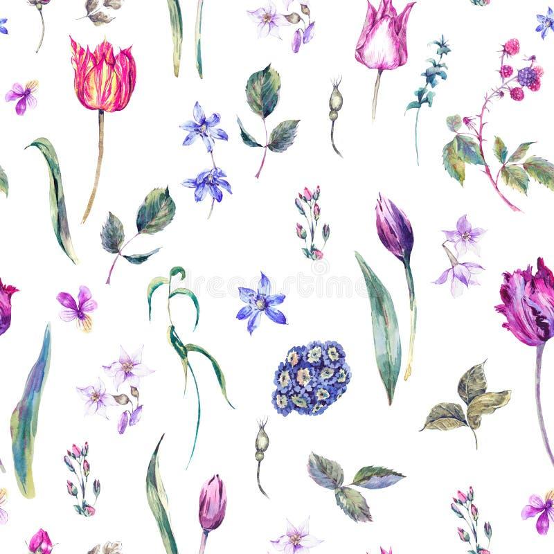 Le vintage fleurit le modèle sans couture d'aquarelle, tulipes pourpres illustration libre de droits