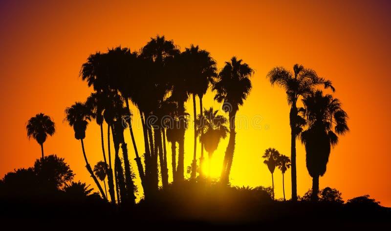 Le vintage a stylisé la photo des silhouettes de paumes au coucher du soleil, Califor photo libre de droits