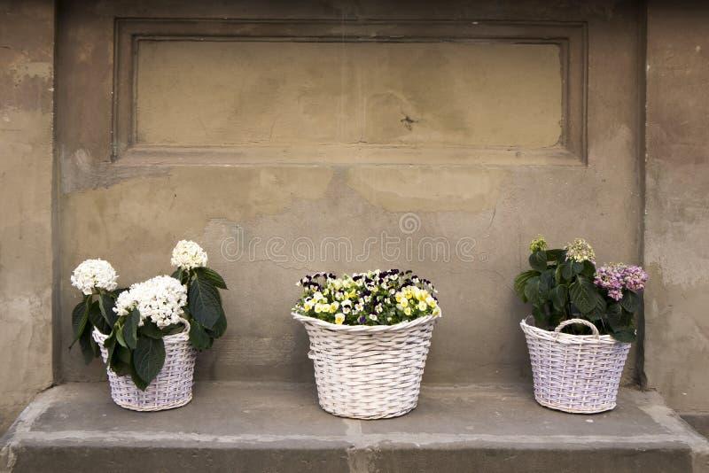 Le viole gialle e le ortensie bianche in grandi canestri di vimini all'entrata al ristorante sulla via come decorazione immagini stock