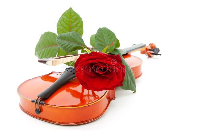 Le violon et le rouge se sont levés photographie stock libre de droits