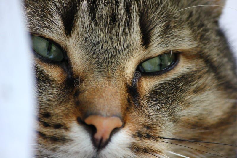 Le visage du chat photos stock
