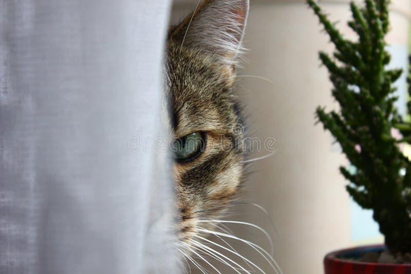 Le visage du chat images stock