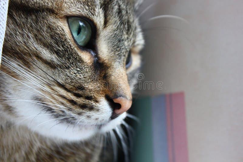 Le visage du chat photos libres de droits