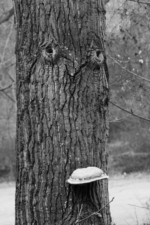 Le visage en bois noir et blanc image libre de droits