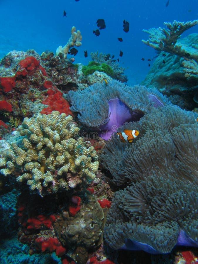Le voisinage de Nemo image stock