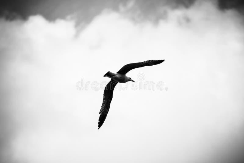 Le vol d'une mouette parmi les nuages dans le ciel photo libre de droits
