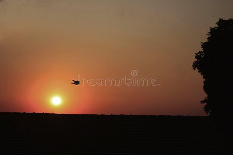 Le vol de l'oiseau migrateur à la recherche de son destin images stock