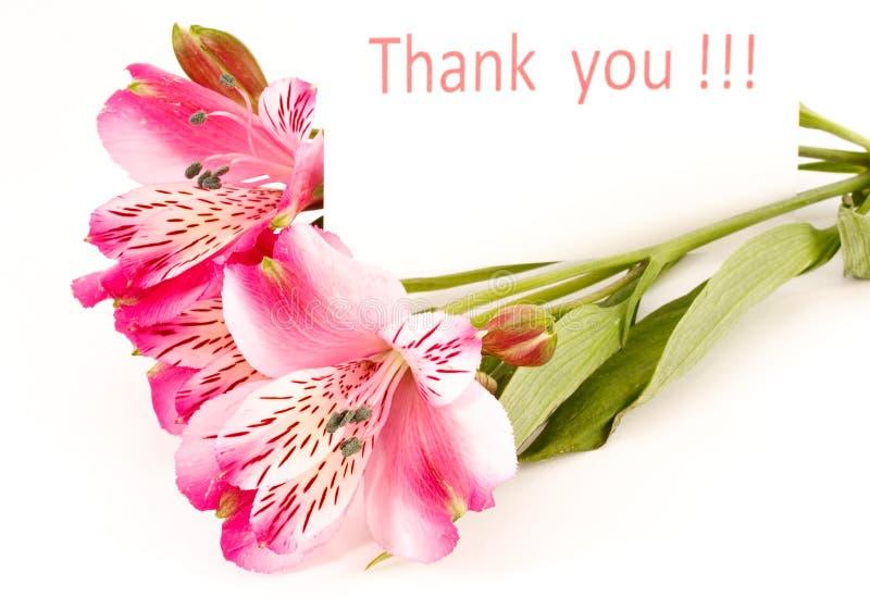 Le `vous remercient ` photo libre de droits