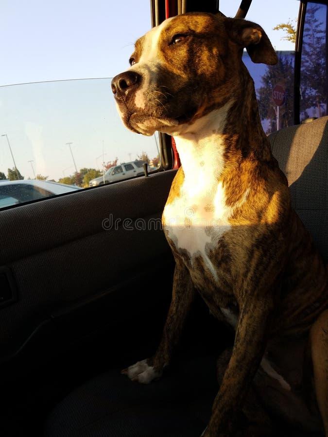 Le voyage de la vie mieux est voyagé avec un chien image libre de droits