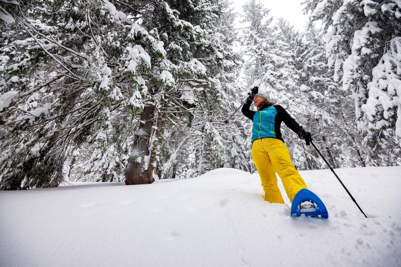 Le voyageur, femme va snowshoeing parmi les pins énormes photo libre de droits