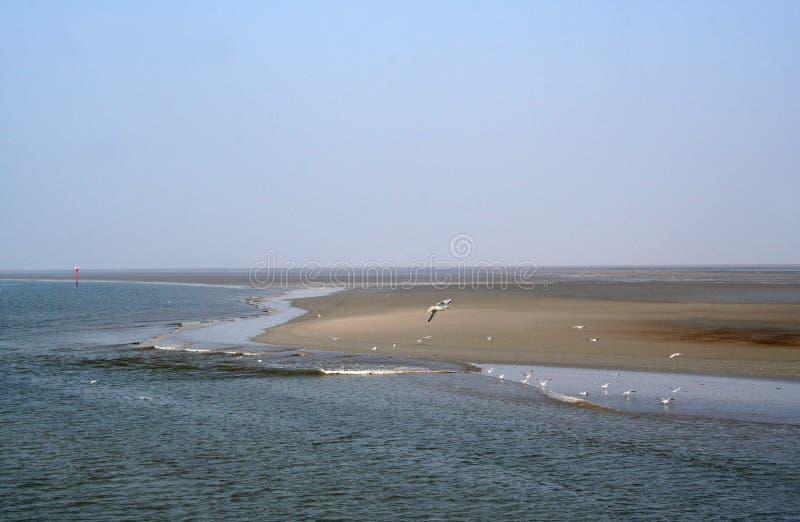 Le waddensea de marée à marée basse photos stock