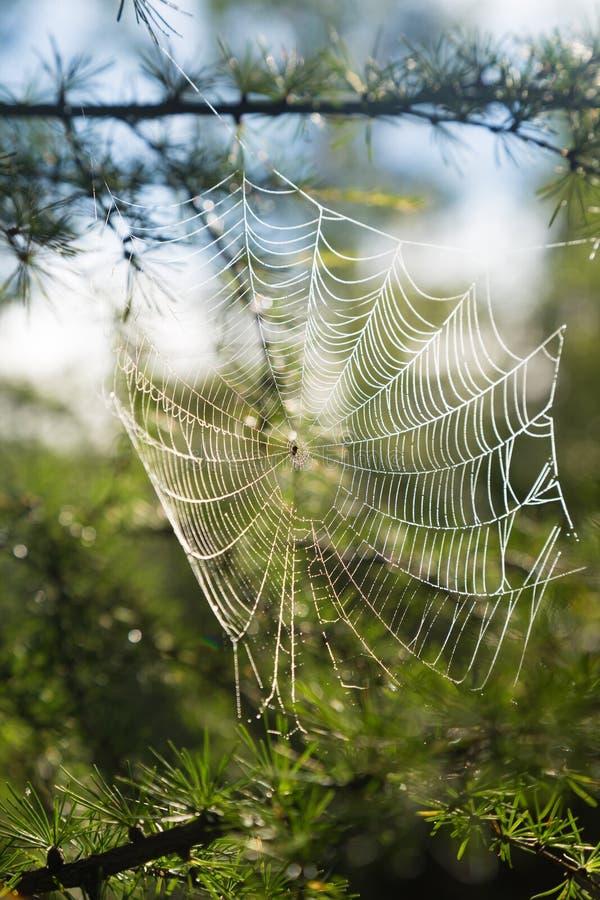 Download Le Web Avec De L'eau Laisse Tomber Le Contre-jour Image stock - Image du pointeau, araignée: 76087401