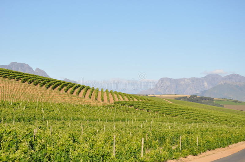 Le Winelands Stellenbosch Capetown photographie stock