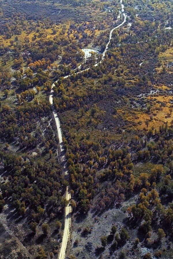 Le Xinjiang : négligence des forêts de forêt d'euphratica de Populus photographie stock