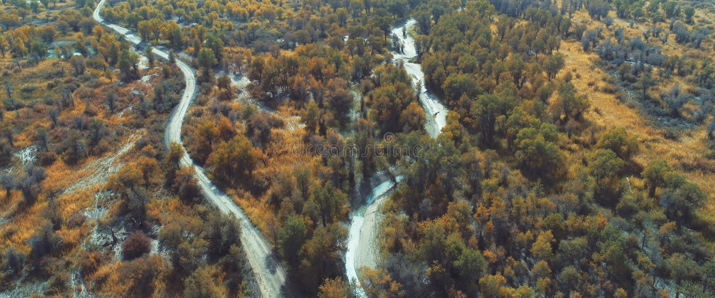 Le Xinjiang : négligence des forêts de forêt d'euphratica de Populus photos stock