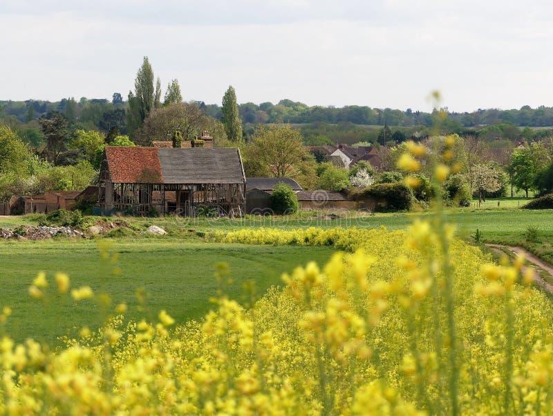 Le XVIème siècle noir de grange, ferme de Woodoaks, croix d'érable, Hertfordshire avec le premier plan du chou frisé fleurissant  image libre de droits