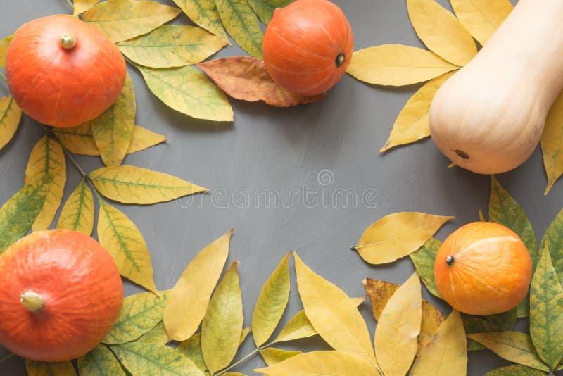 Le zucche arancio raccolgono con le foglie di giallo di caduta sulla tavola di legno grigia Struttura di caduta fotografia stock libera da diritti