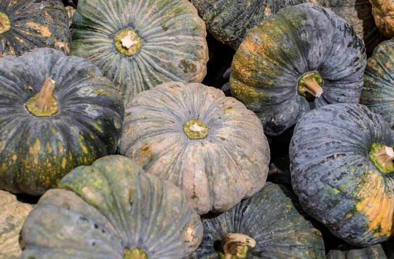 Le zucche asiatiche hanno accatastato Mucchio della zucca venduto nel mercato di prodotti freschi La zucca è una pianta può ess fotografie stock