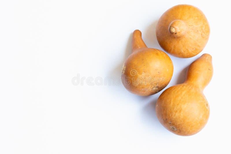 Le zucche decorative con fondo bianco immagine stock