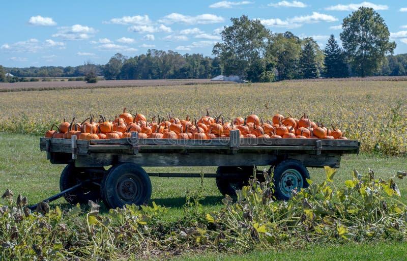 Le zucche sono accatastate su su un vagone di legno in un giacimento della zucca del Michigan immagini stock libere da diritti