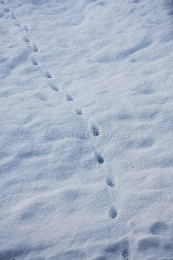 Download Lead the way stock photo. Image of january, print, tracking - 7661406