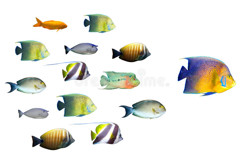 Download Leadership Concept - Big Fish Leading Stock Image - Image of crowd, followers: 16013001