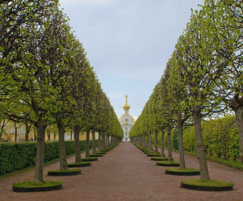 Leadind da aléia ao palácio grande, Petergof, Rússia imagens de stock