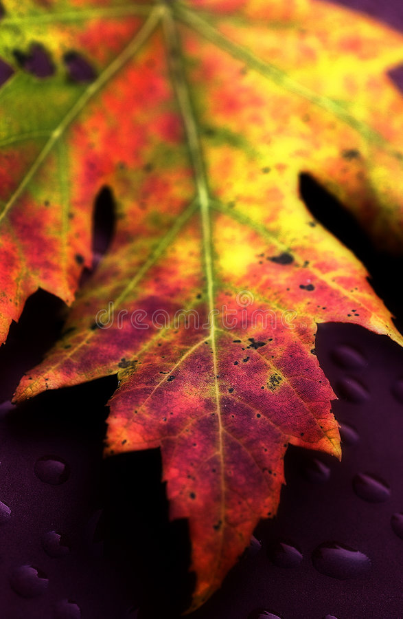 Leaf #1 stock photos